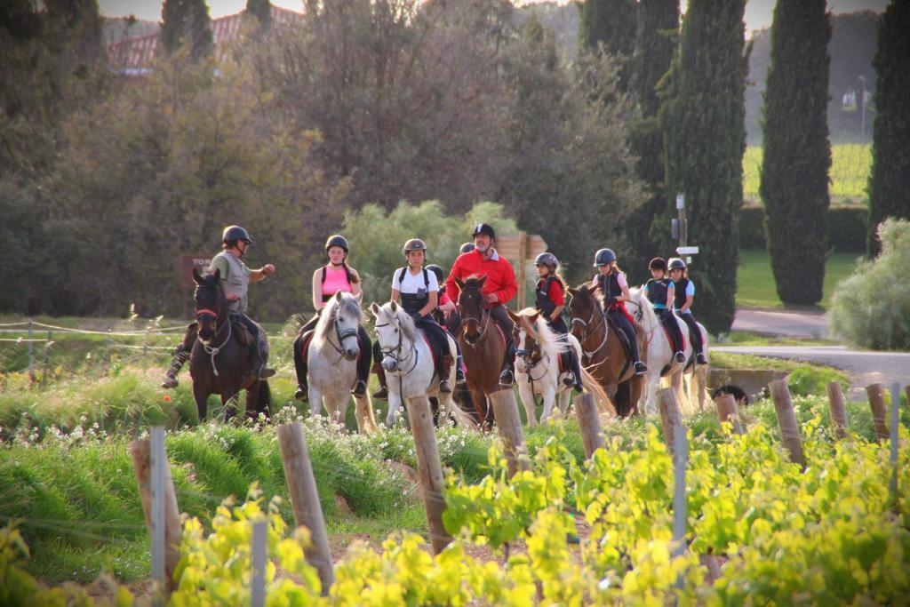 Cavalls i vinyes