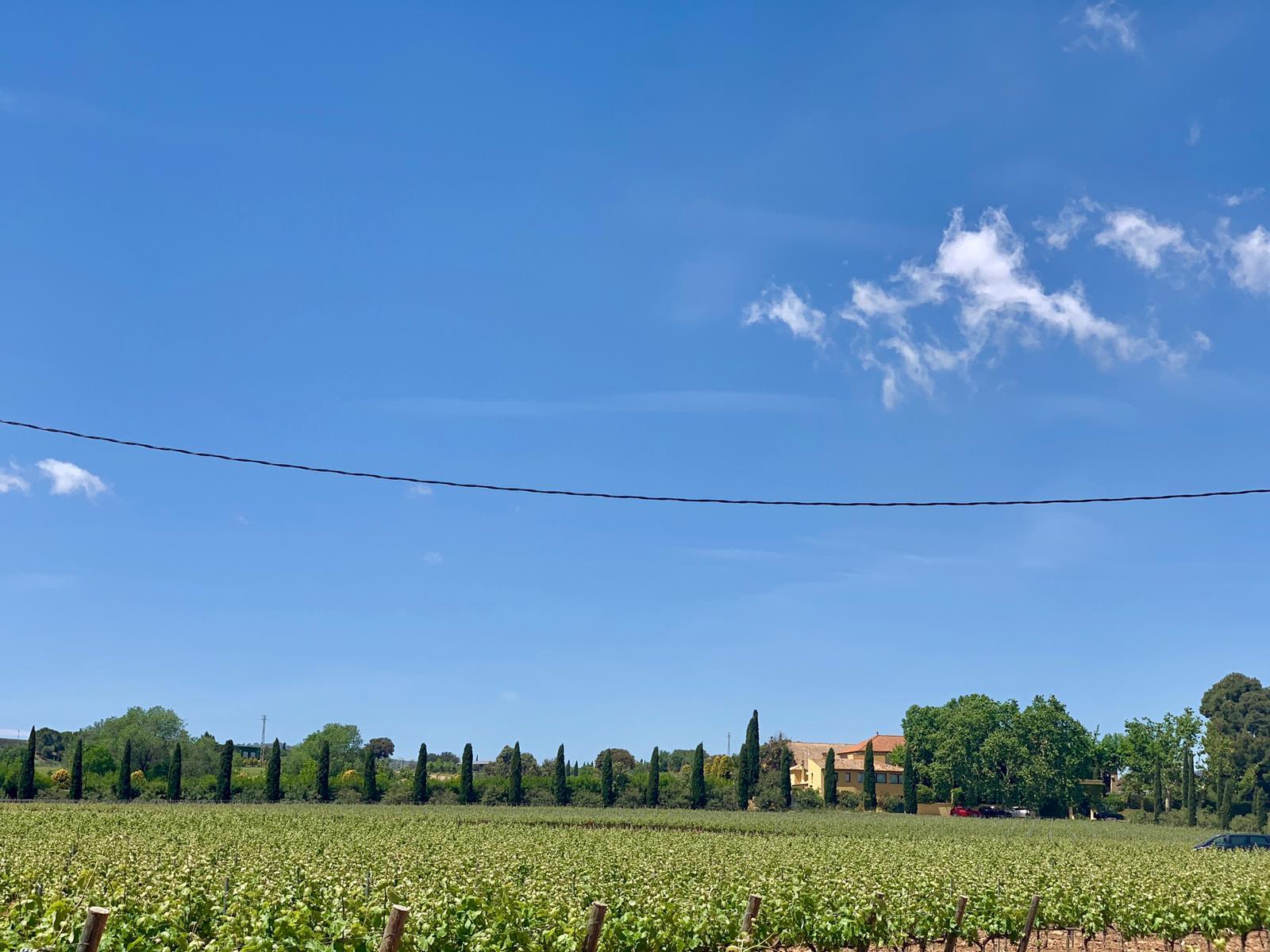 Camp de vinyes